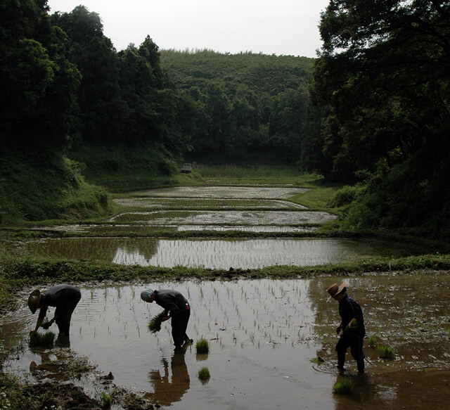里山田植えの風景